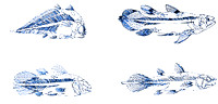 Coelacanth Fossils